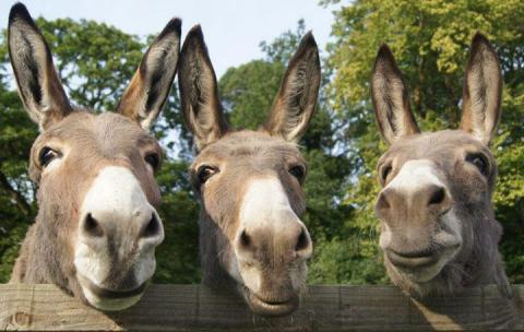 image-birmingham-donkeys-1427044357
