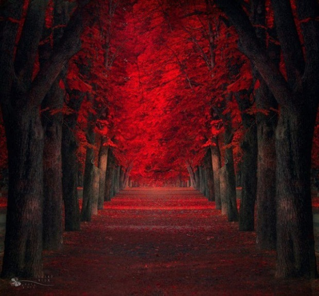 red_maple_tree_forest_by_tempestknightingale-d6pws73